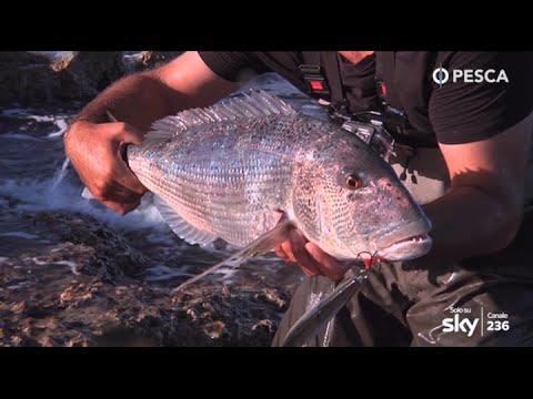 Pesca di cercatore di profondità sonica di video