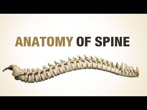 Osteocondrosi della colonna vertebrale lombosacrale che cosa è e trattamento
