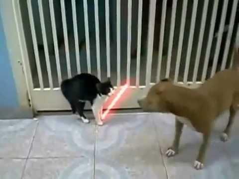 Chó mèo đánh nhau theo phong cách