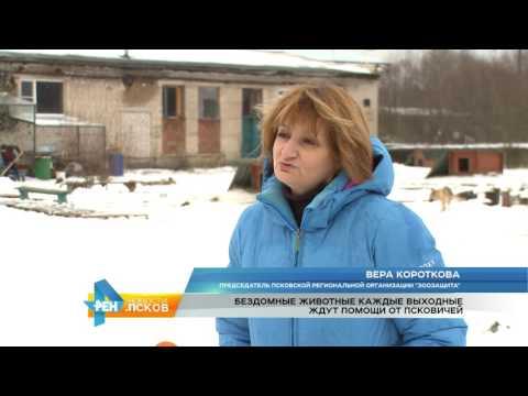 Новости Псков 05.12.2016 # Помощь Зоозащите