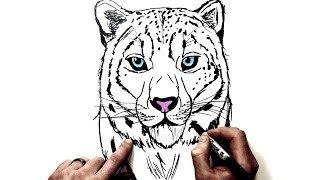 ᐅ Descargar Mp3 De How To Draw A Snow Leopard Cute And Easy Step By