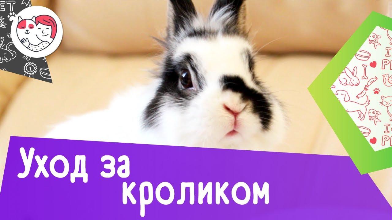 4 особенности при уходе за кроликами