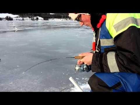 Søørred fanges ved isfiskeri i Norge