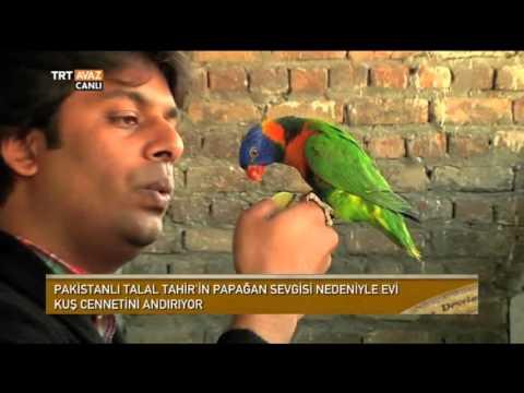 Papağan Sevgisinden Evi Adeta Kuş Cennetini Andırıyor - Devrialem - TRT Avaz