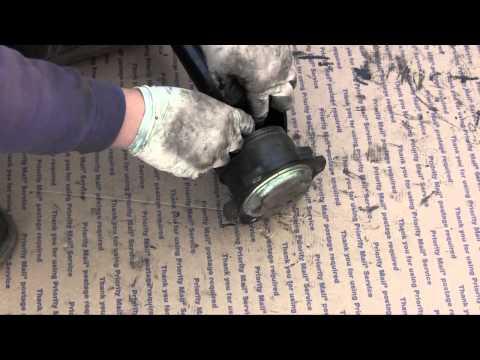 Shar Pei in articolazioni tumefatte e temperatura