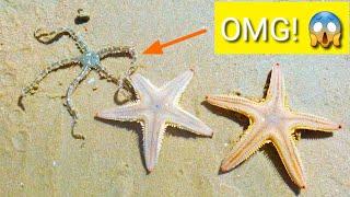 Found Starfishes, Squid eggs, Razor Shells, Sea Anemones while catching Mantis Shrimp