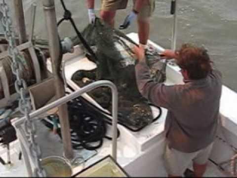 Gulf Coast Shrimp Boat Trip, Biloxi Mississippi