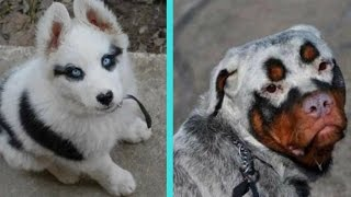 31 Unique Dogs With Unbelievable Fur Markings | Kholo.pk
