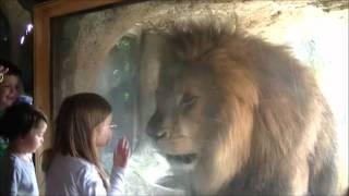 Hitler transformed in a lion