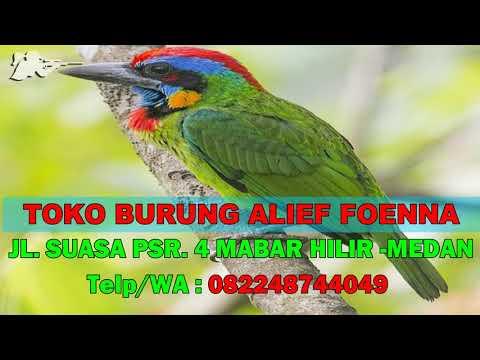 Download Takur 3gp Mp4 Codedfilm