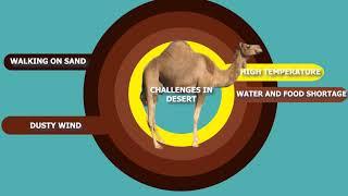 Adaptation in Camel