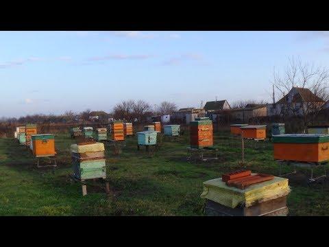 Зима а пчела на облёте на пасике