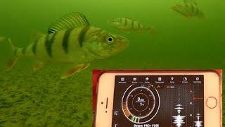 Эхолот для рыбалки из смартфона