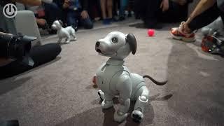 Милая собака-робот от Sony Aibo ERS-1000 — IFA 2018