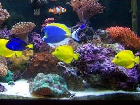 P&P Tropical Fish - Beautiful Salt Water Fish Tank Marine Aquarium with Live Rock