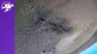 Winter Tree Dives - FPV Acro Freestyle Drone Takes on Only Tree Around - Plenty of Space to Mess Up