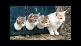 Funny Kittens and Cats Compilation #3 2018 || FunnyVines