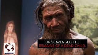 Bones reveal Neanderthal child was eaten by large bird