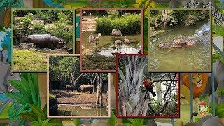Tierisches Vergnügen Im Zoo Basel | Basler Zolli