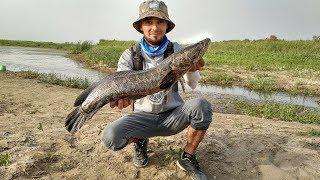 Рыбалка в узбекистане 2018
