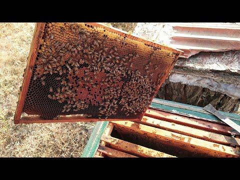 Ни развития ни мёда и такое бывает