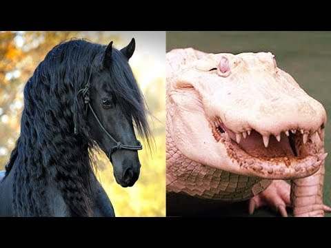 10 Most Expensive Animals In The World