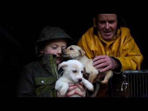 العرب اليوم - شاهد : توقيف عناصر عصابة مشبوهة في تهريب الكلاب داخل إيطاليا