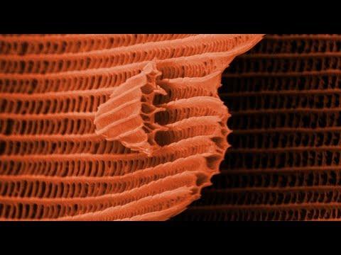 Motýlí křídla pod elektronovým mikroskopem