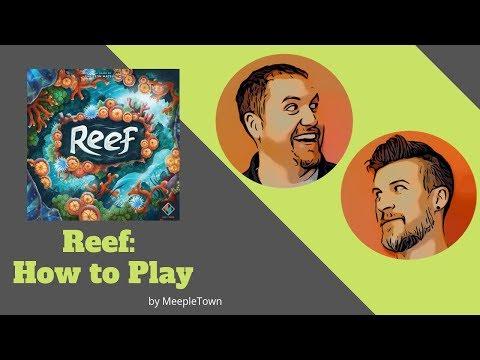 How to Play: Reef - MeepleTown
