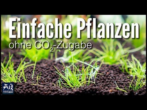 PFLANZEN OHNE CO2 HALTEN | AquaOwner