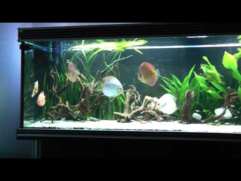 DISCUS 700L PLANTED TANK 3rd