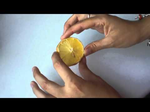 El medio desinfectante para la destrucción de los hongos preventol r80