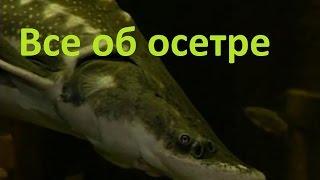 Чем полезен рыбалка