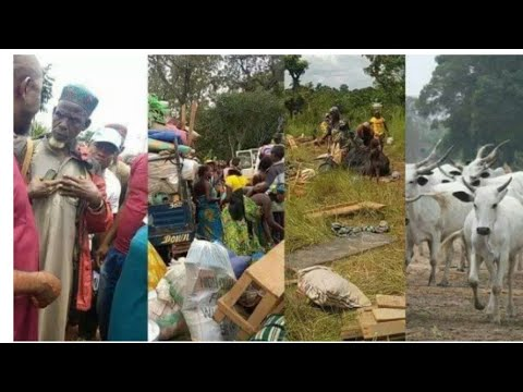 Ruga finally commence in eboyin state as Fulani headsmen arrives with their families and propertie