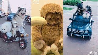 Thú cưng bây giờ là chân ái | Còn gấu thì có hay không không quan trọng | Cute and funny pets