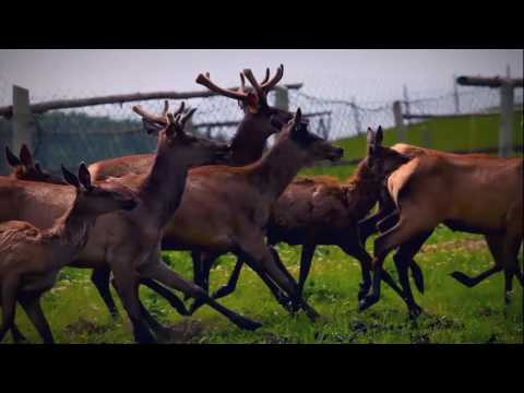 Presentation film about Altai Krai