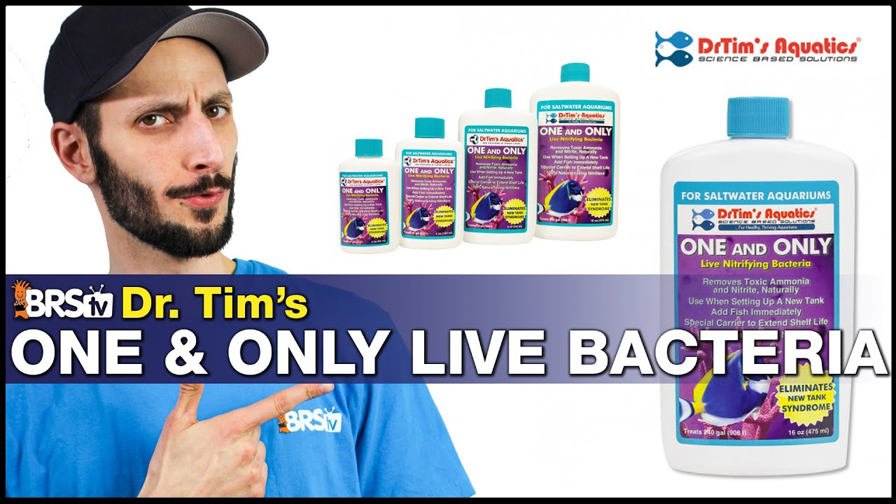 Dr. Tim's One & Only and Fishless Cycle Bundle: Cycle your aquarium quicker by giving it a boost.