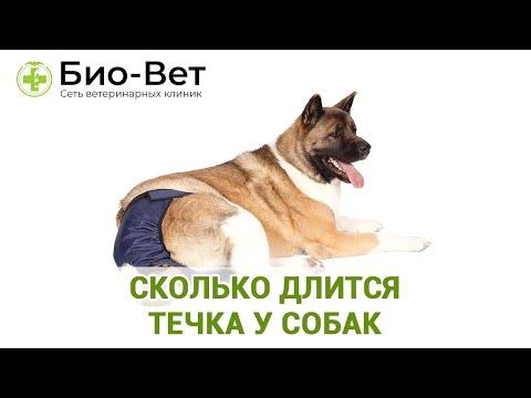 Течка у собак - всё что нужно знать 👩⚕️/ Сеть Ветклиник Био Вет