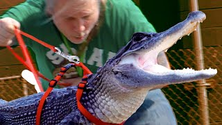 TAKING MY PET BLACK ALLIGATOR FOR A WALK ON A LEASE OUTSIDE!! | BRIAN BARCZYK