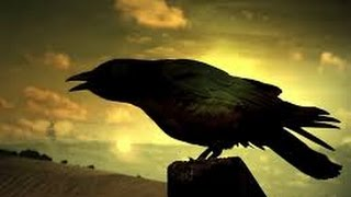 Crows Smarter Than You Think(full Documentary)HD