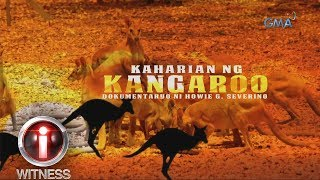 I-Witness: 'Kaharian ng Kangaroo,' a documentary by Howie Severino (with English subtitles)