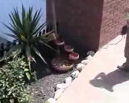 Fuente solar de jardín