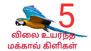 5 costly macaw parrots
