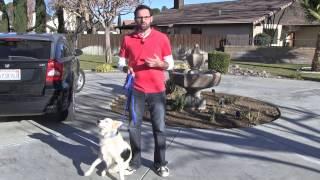 Bringing Your Dog Home Part I