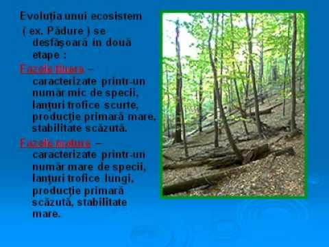 Paraziți ai ecosistemului. Vierme parazit