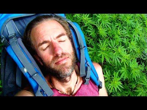 Where Does Marijuana Grow Wild? Here's Where!!
