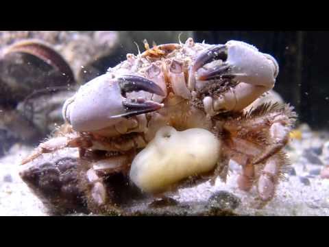 Ano ang gamot ay maaaring maging buntis para sa mga worm