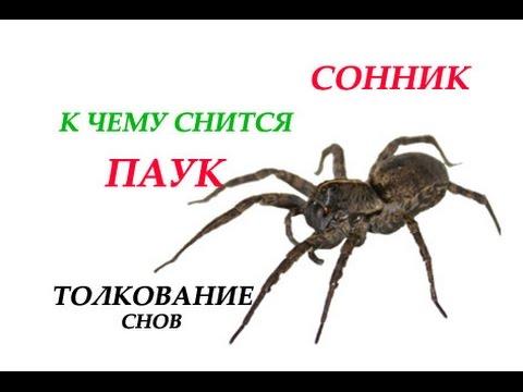 К чему снится паук Сонник