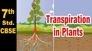 Class 7 | Transpiration in Plants | Science | NCERT | CBSE Board | Home Revise