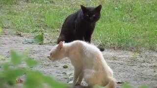 Коты драчуны))